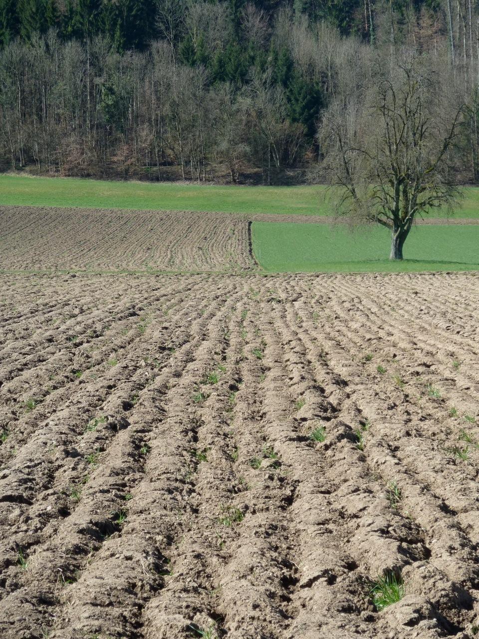 Uzh geographisches institut bodenkunde und biogeochemie for Soil information in english